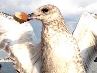 sand gull bird photo booth