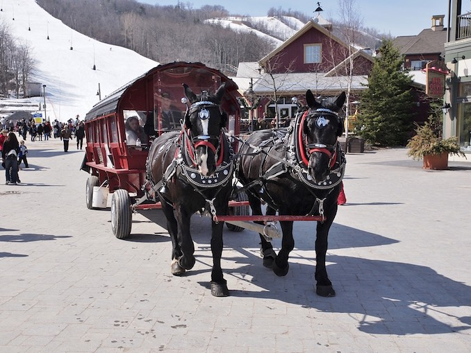 Horse and carriage blue mountain