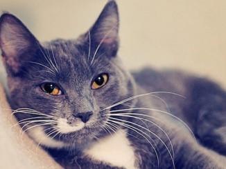 Jonesy Cat adoption