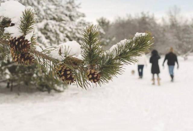 Evergreen Brickworks - Romantic Winter Dates