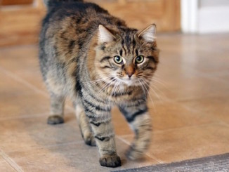 adopting cats like mikey