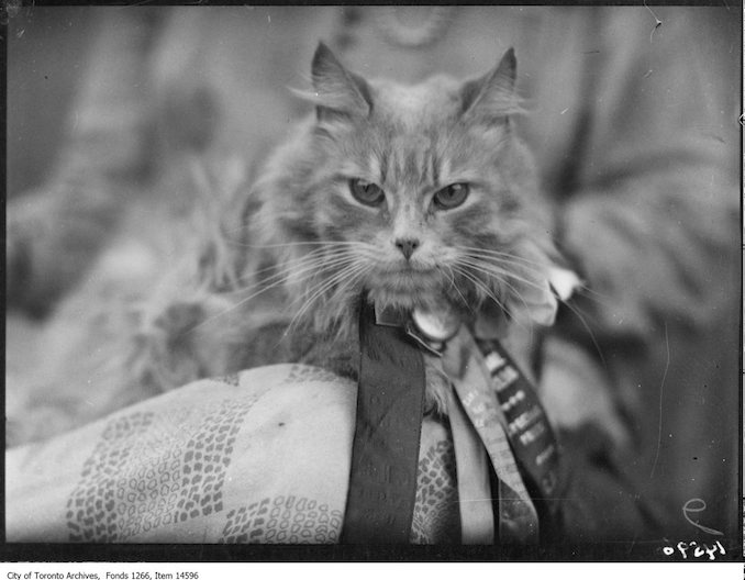 C.N.E., Cats, Paddy, Persian, Mrs. Robert [Huckle], Toronto. - August 30, 1928