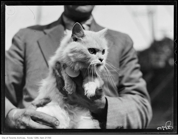 CNE, cat show, Champion Lady Wonder Gal, Mrs. E.G. Fessenden, Toronto aug 26 1930