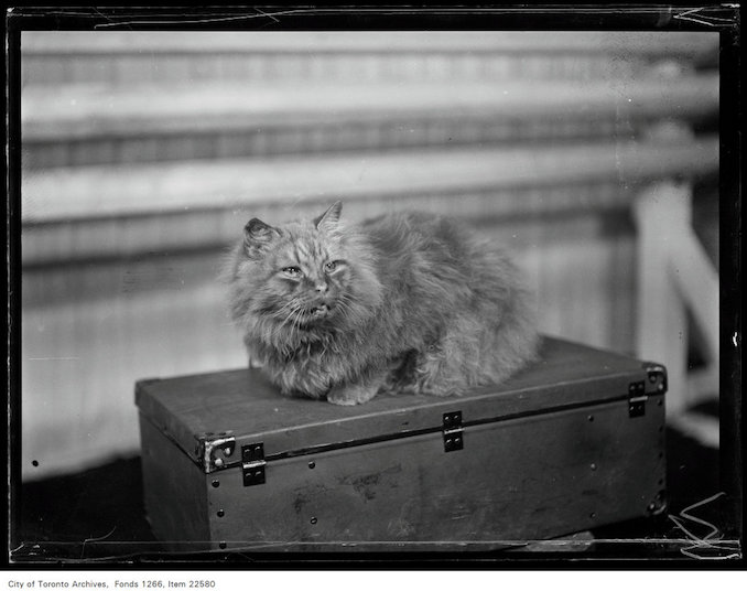 Winter Fair - November 20, 1930 - Vintage Animal Photographs