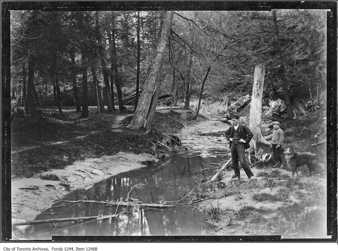 Wychwood ravine. - 1907 - Vintage Animal Photographs