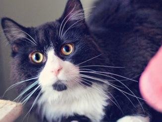 Rufus pet adoption