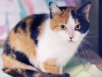 North Toronto Cat Rescue Fundraiser