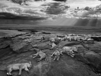 Wildlife Photographer of the Year Exhibition Coming to the ROM