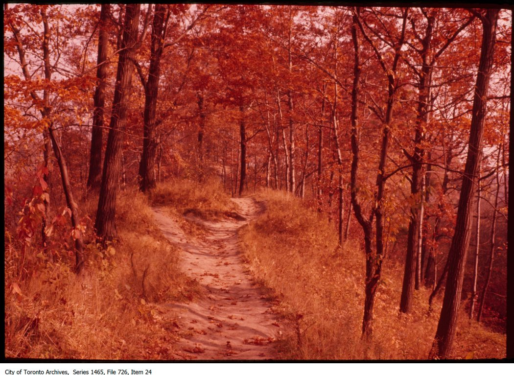 1970-87 - Park path in autumn