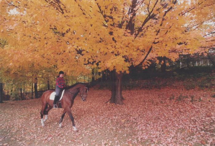 1994 - Jane Scott and horse Rebel at Sunnybrook Park