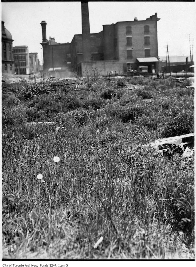 1907 - Toronto fire ruins grown over with weeds.