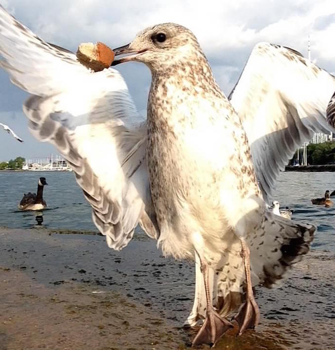 photo booth winners sand gull