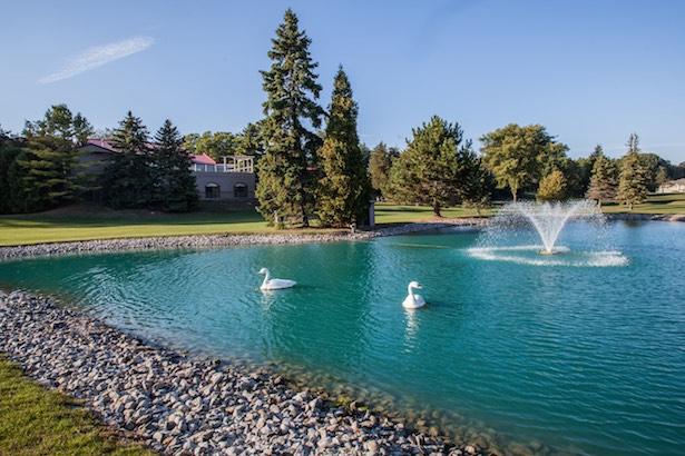 Ontario vacations Oakwood Resort Pond Swans