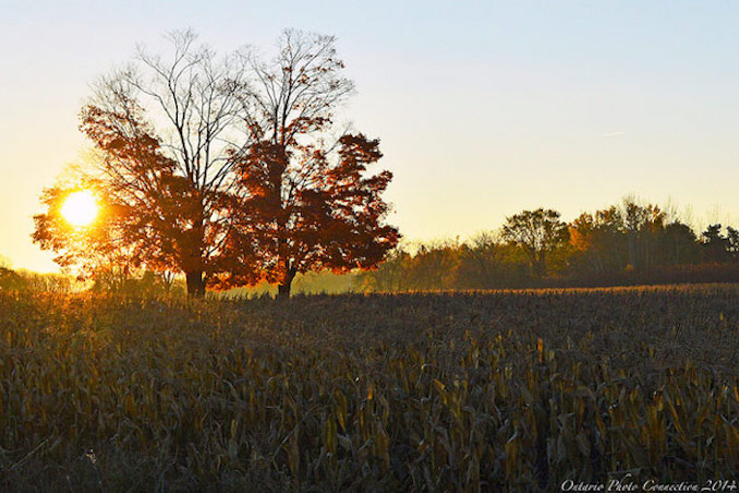 Autumn Sunrise from Ontario Photo