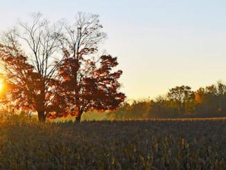 Autumn Sunrise in Ontario