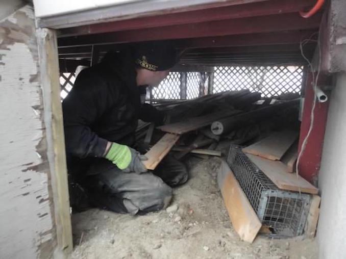 SWAT Wildlife Animal Control