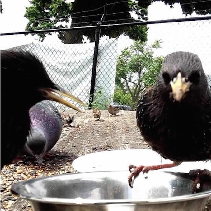 Standard IP Telecom birds