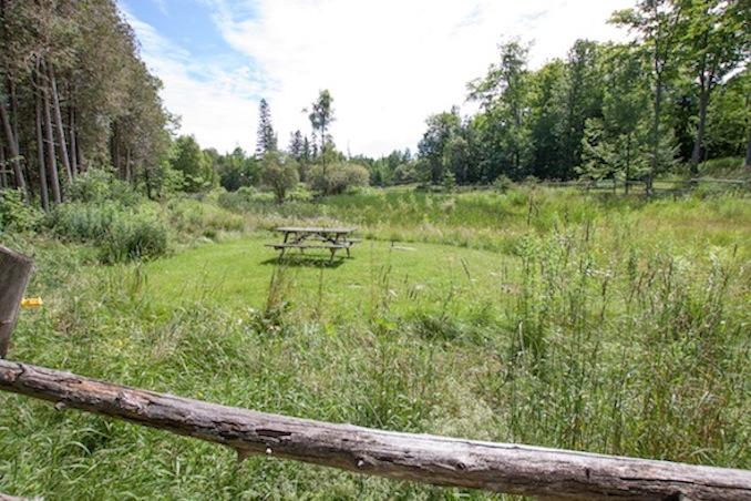 Viamede Resort picnic spot