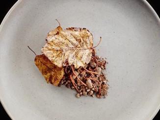 Actinolite Toronto Dessert