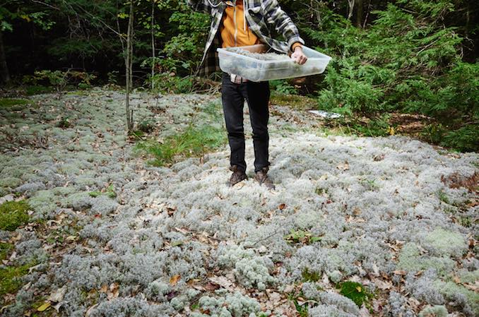 Foraging for Sustainable Canadian Cuisine at Actinolite