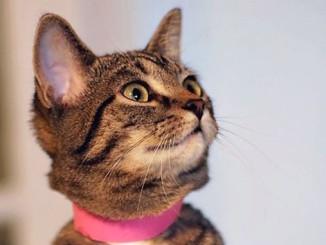 CeCe North Toronto Cat Rescue