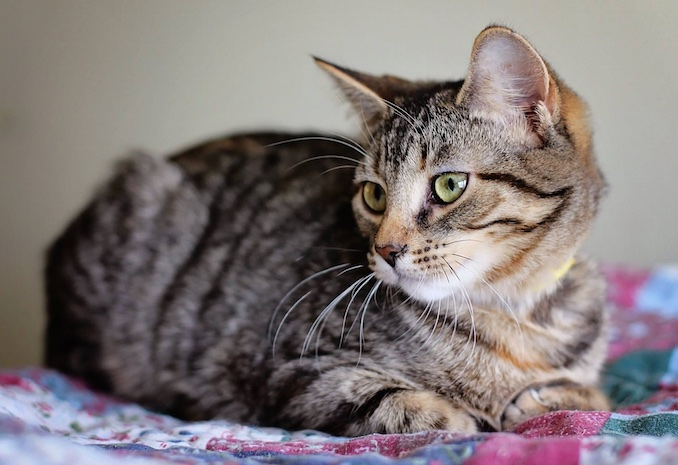 adopting cats