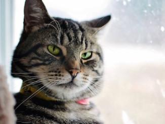 Tramp North Toronto Cat Rescue