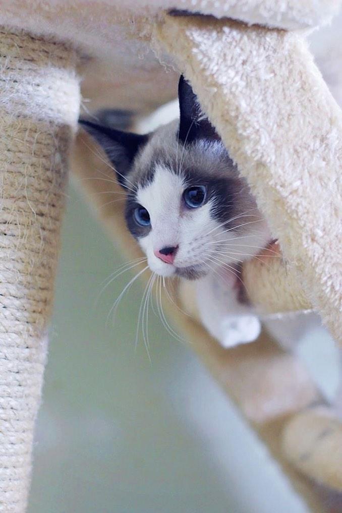 Olaf the cat - Cat Rescue
