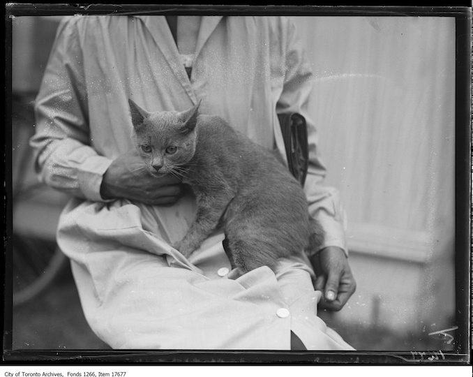 CNE, cat show, Bunny Findlay, Mrs. Bessie Fischer, Detroit. - August 27, 1929