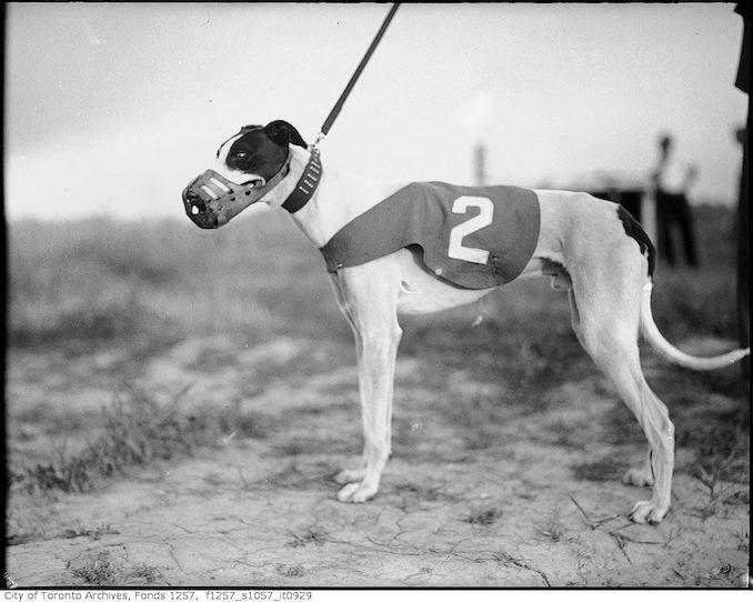 Greyhound 1930?