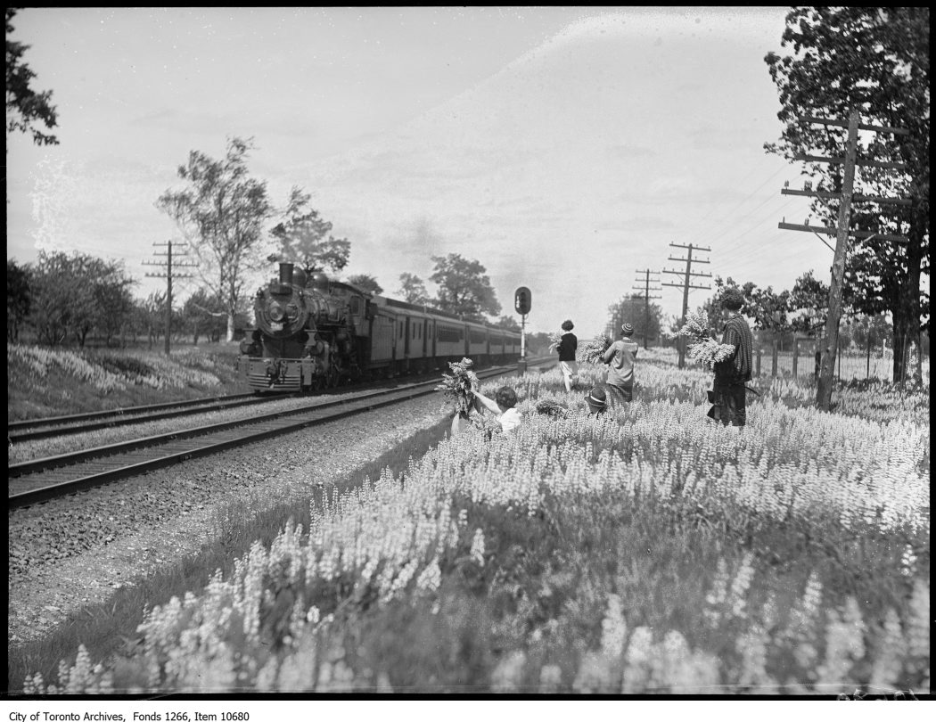 Lorne Park, girls gathering lupine, train passing. - June 12, 1927