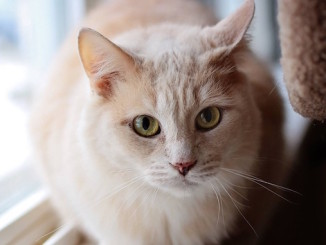 Max at North Toronto Cat Rescue