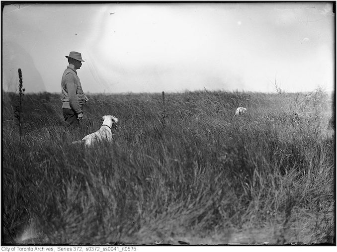 Mr. Townsend and Sport (dog) Original negative by A.S. Goss 1911 - Vintage Animal Photographs