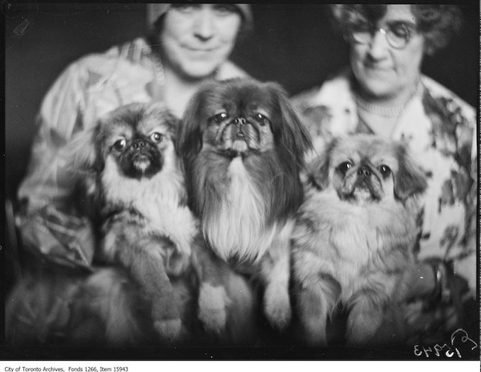 Pekingese dogs, [Billy Coo], [Pun Chew], Eastern Beauty. - March 16, 1929 - Vintage Animal Photographs