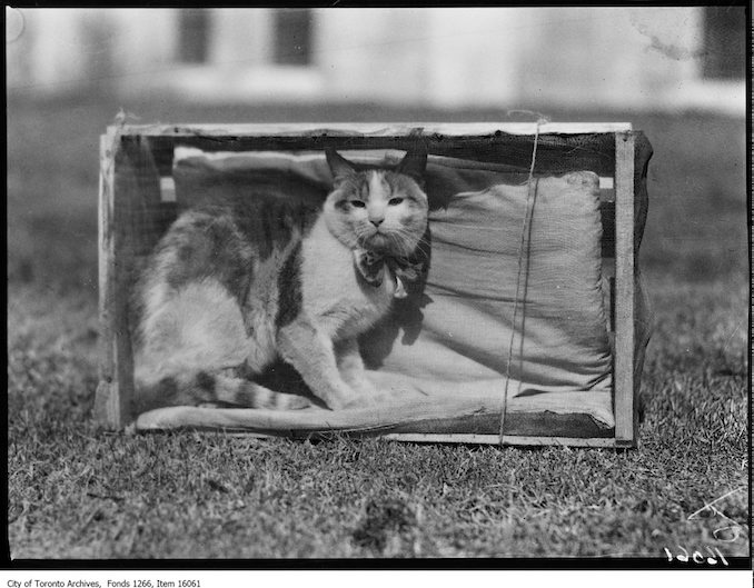 Pets Parade, Ginger, Audrey Ellis, age 13. - April 2, 1929 - Vintage Animal Photographs