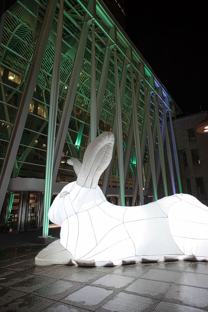 Giant Rabbits in Toronto