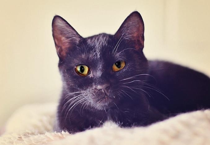 Marshall North Toronto Cat Rescue