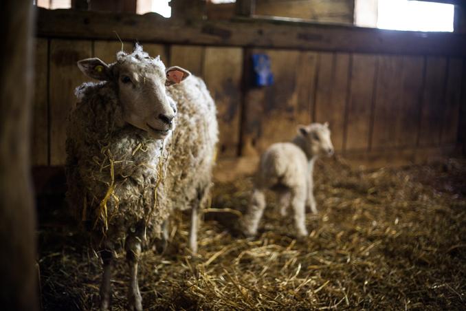 Riverdale Farm Photo Competition