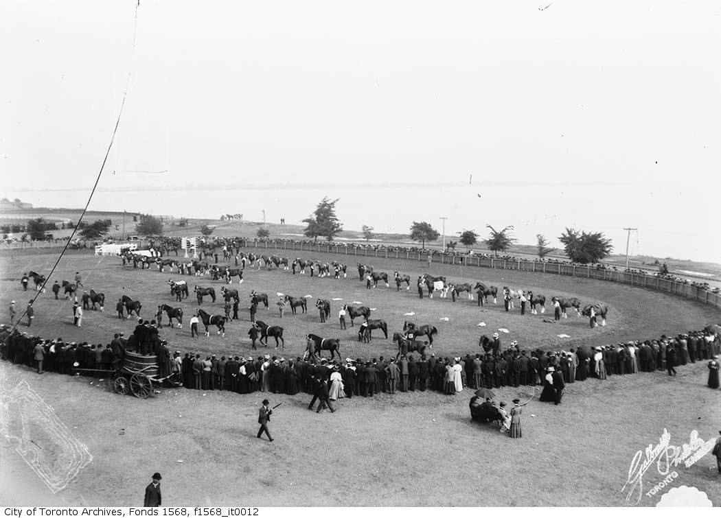 1904 - Canadian National Exhibition prize horse parade