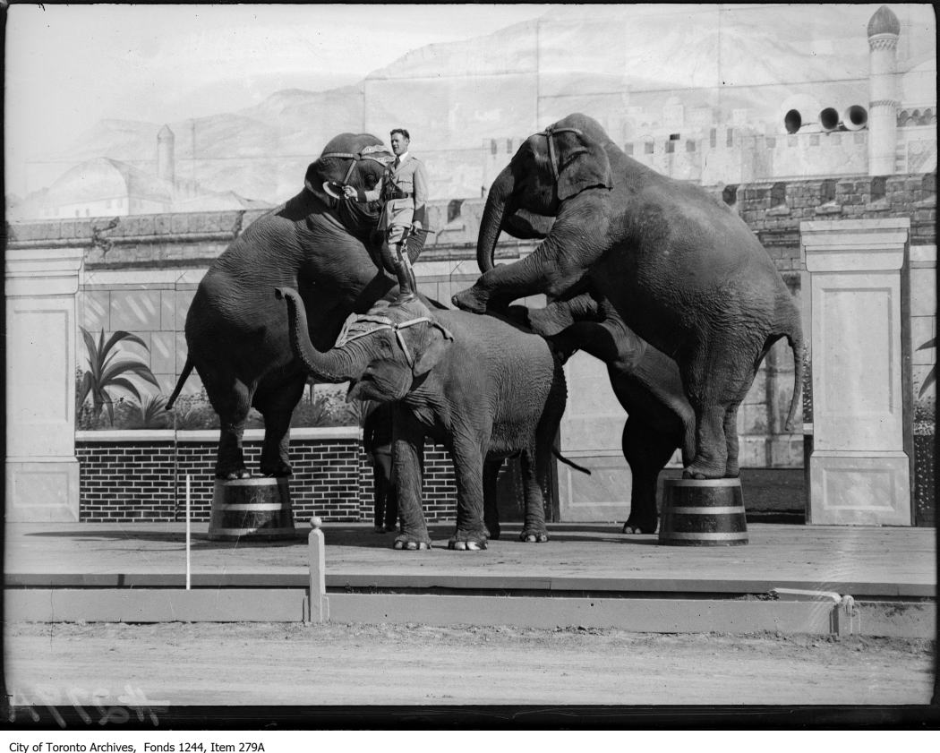1914 - Performing elephants and trainer