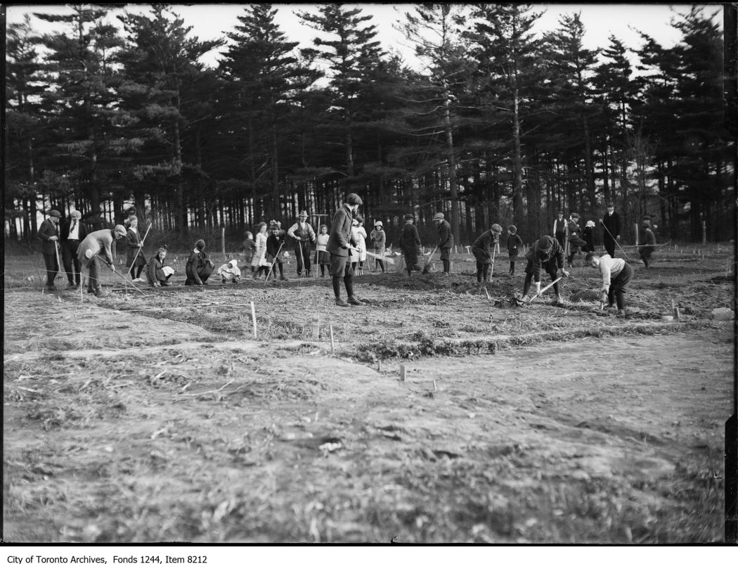 1917 - Gardening at Hillcrest Public School