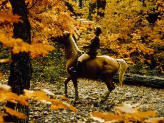 1965-69-horseback-riding-near-stables-wilket-creek-park-book-4-photo-12-copy