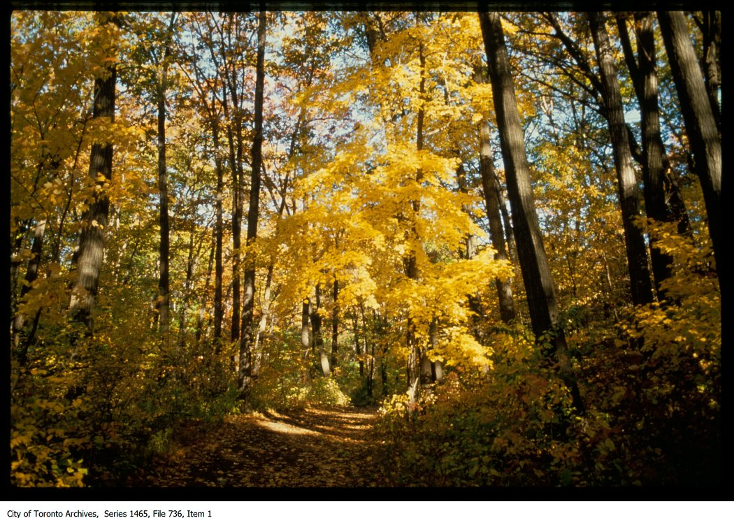 1972-81 - Park path in autumn - Vintage Autumn Photographs