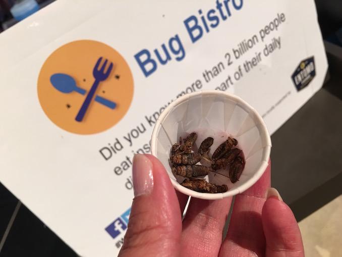 bug food