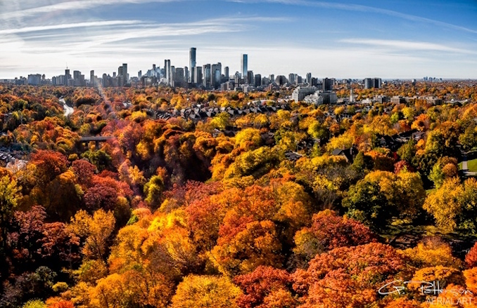 Midtown Toronto Greg Patterson - Autumn photograph