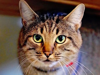 newton the cat