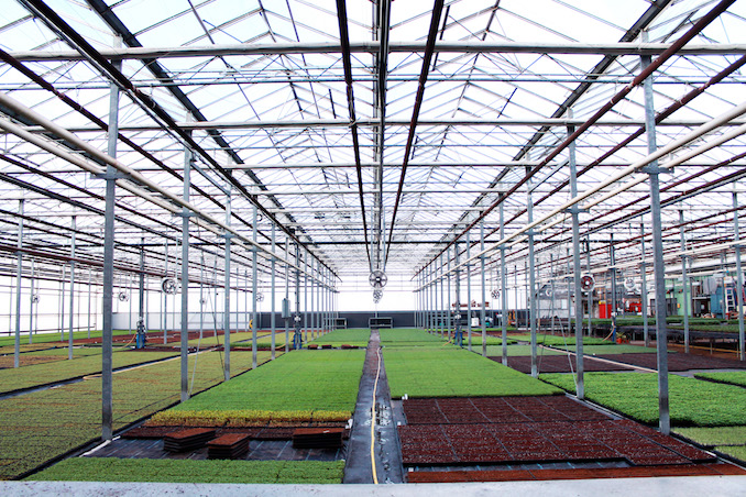 Greenbelt microgreens greenhouse