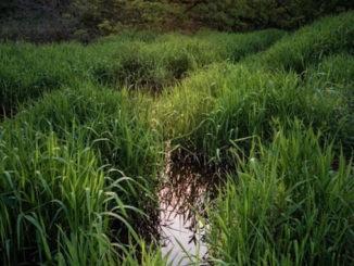 brady baker humber marsh