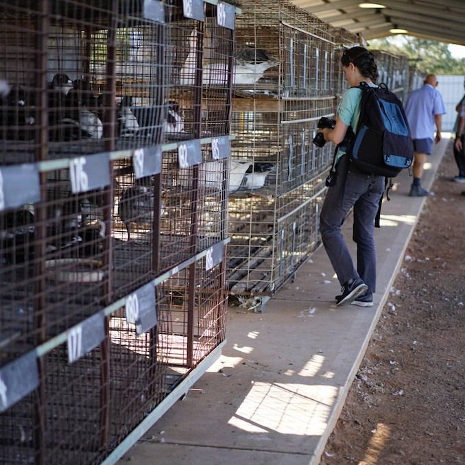 Jo - Adelaide Poultry Sales - Credit: Suffering Souls