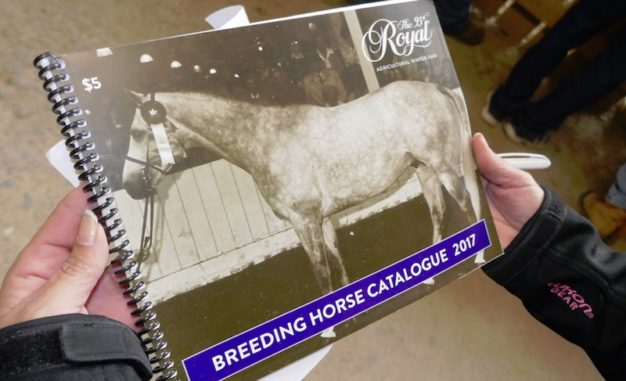 2017 Breeding Horse Catalog - horses for sale